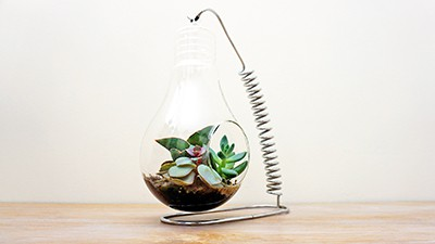 Turning Bulb and Banana Holder Into Succulents Paradise [2in1] Thumbnail